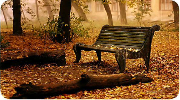 bench autumn