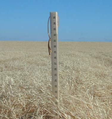 measuring_stick