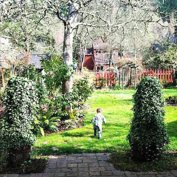 finn in garden