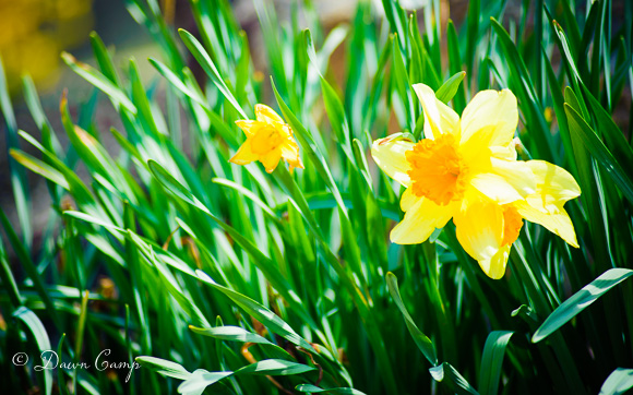 100403_SpringWalk_044