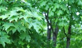 leaves-581x387