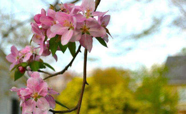 20130726_LisaJoBaker_Blossoms
