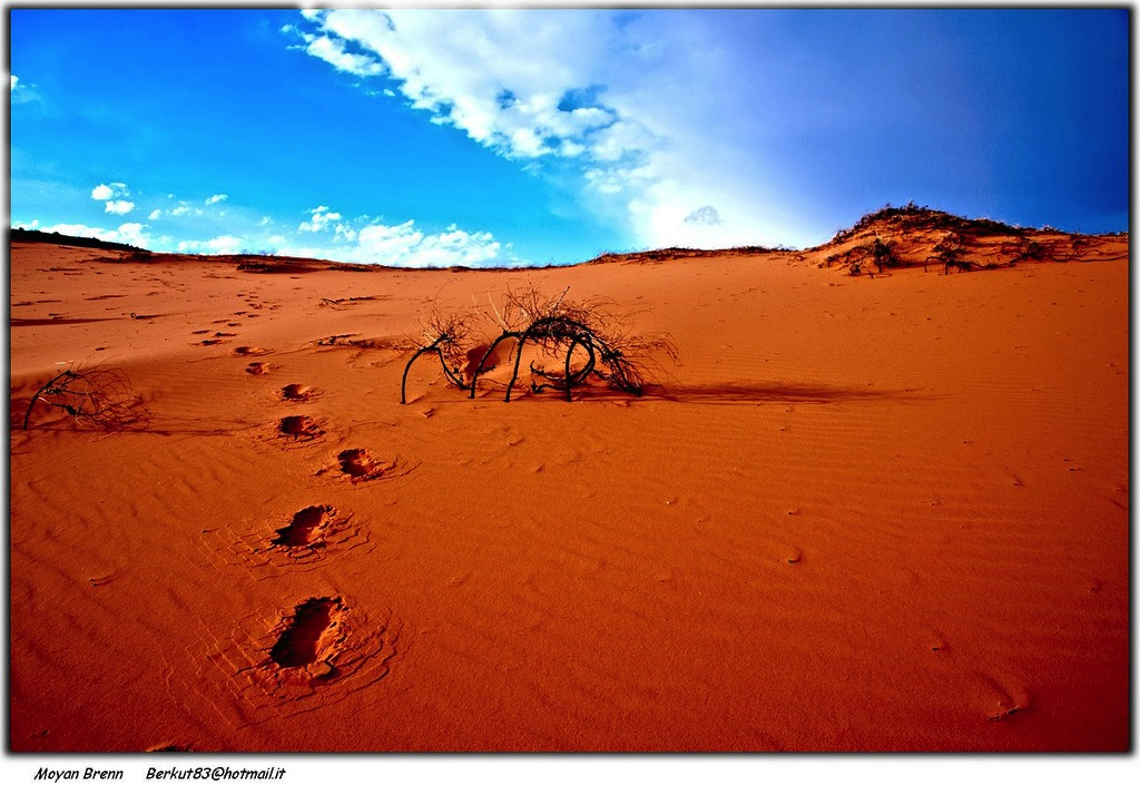 20130913_AnnieDowns_desert.jpg