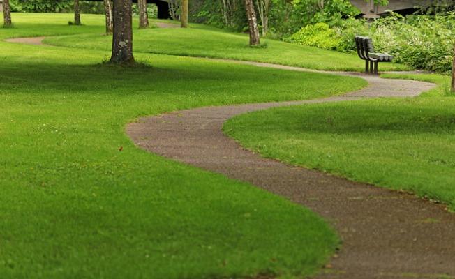 windy path