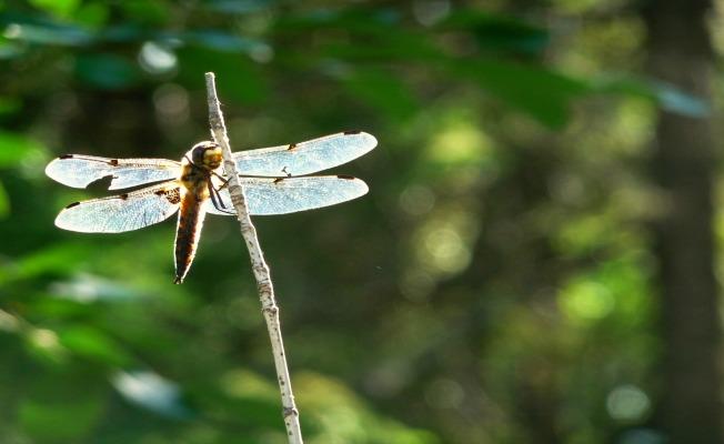 MichelleDeRusha_dragonfly