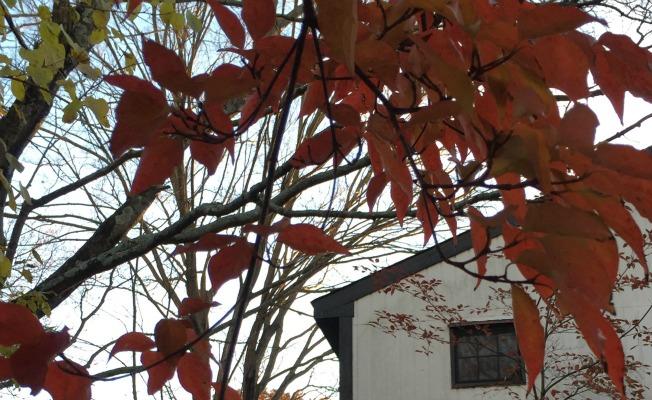 White barn, autumn leaves