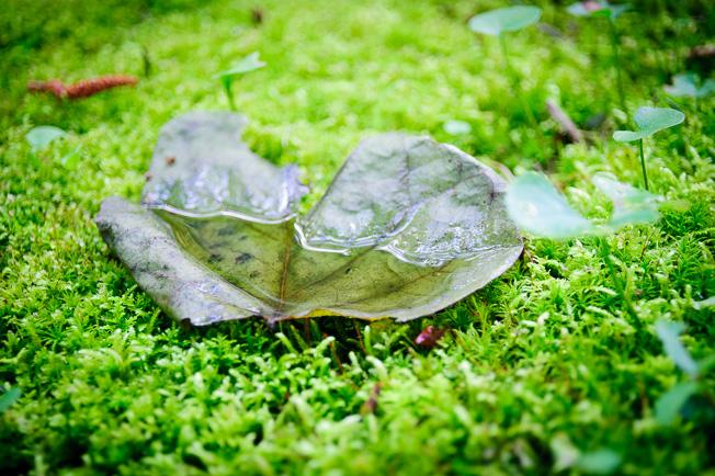 rain soaked leaf